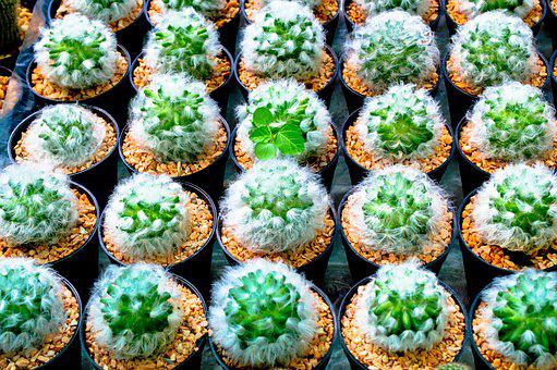 For All Skin Types, Cactus, Jardiniere