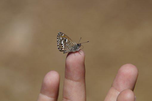 Tiny, Butterfly, Trustful, Courageous