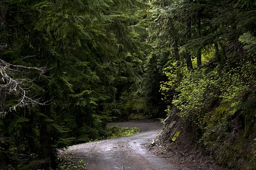 Forest, Trees, Green, Sunlight, Road