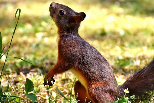 Squirrel, Cute, Animal, Nager, Nature