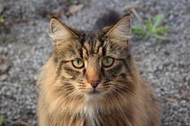 kodittomat kissat lahti seksivideoita ilmaisia
