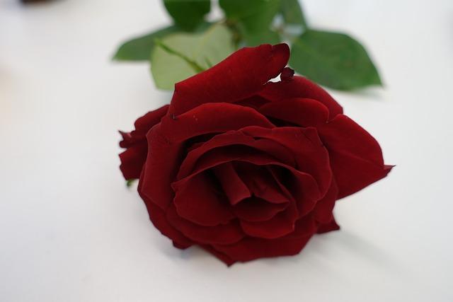 Rose Rouge L'Amour Coeur · Photo Gratuite Sur Pixabay