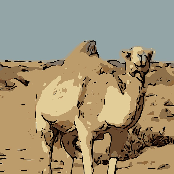 Camel Drawing - Free image on Pixabay