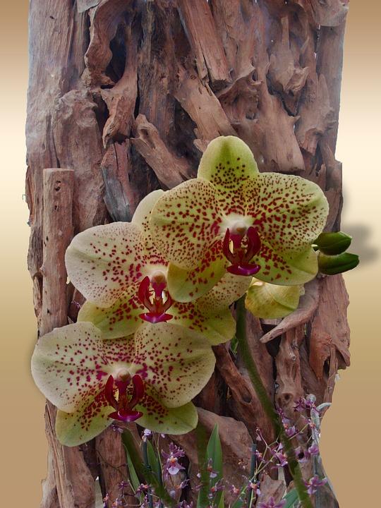 Blume Orchidee Dekoration Kostenloses Foto Auf Pixabay