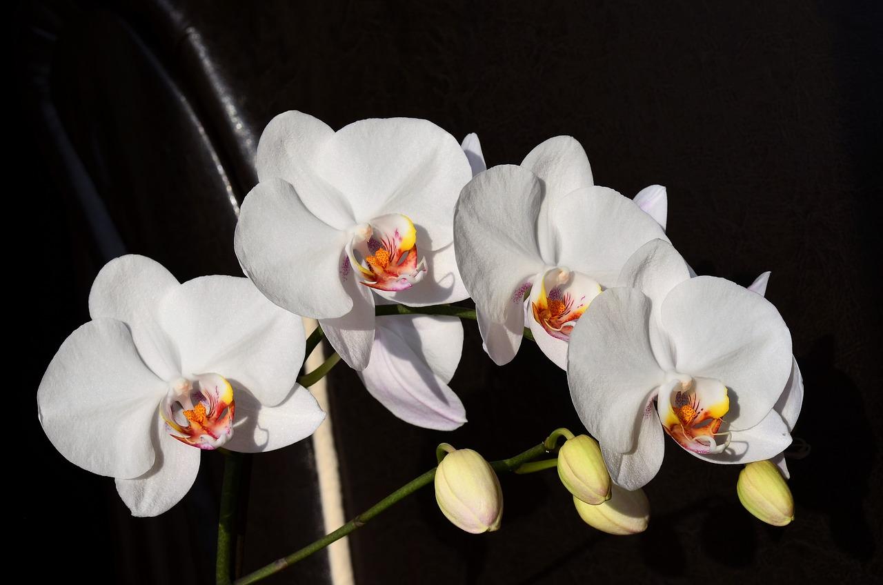 Цветок орхидеи белой фото