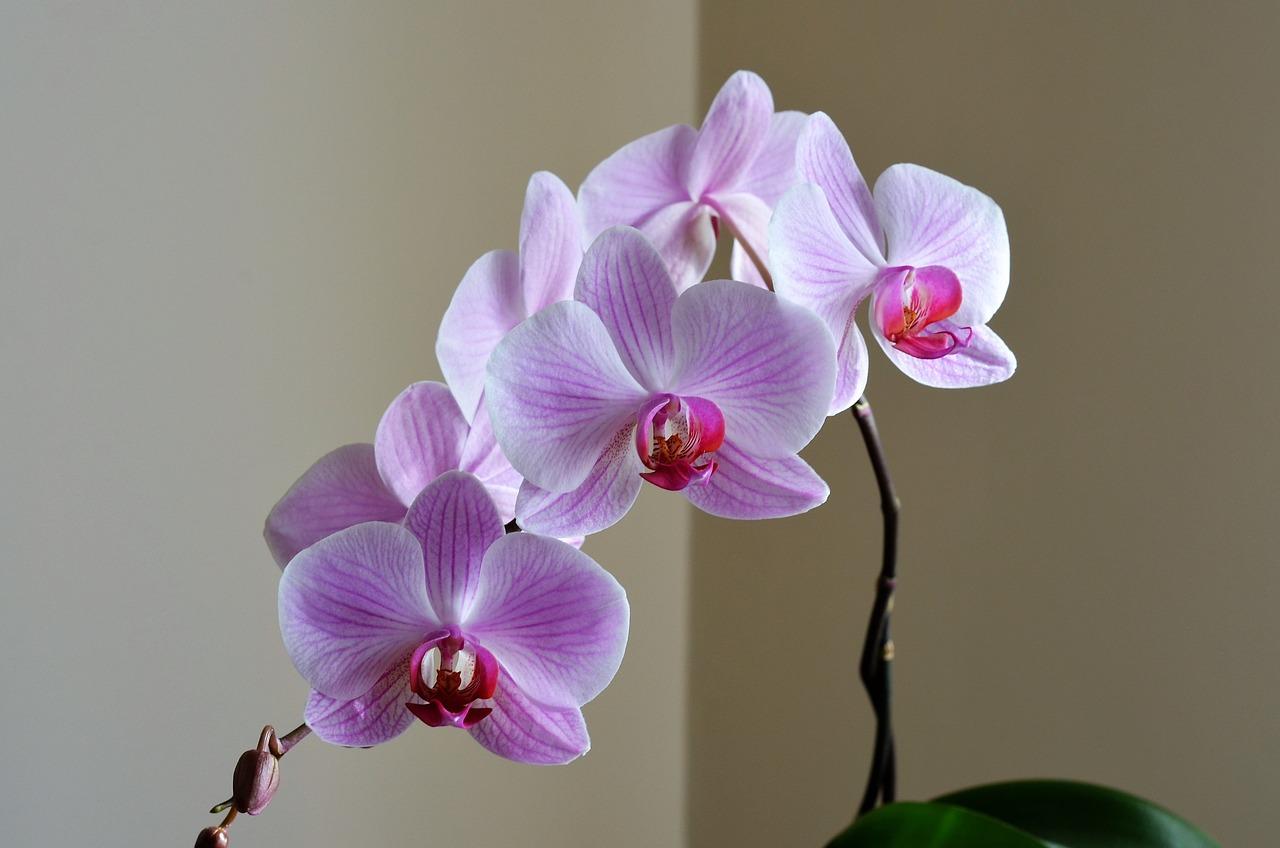 нефтяных месторождений орхидеи и лили картинки вас есть