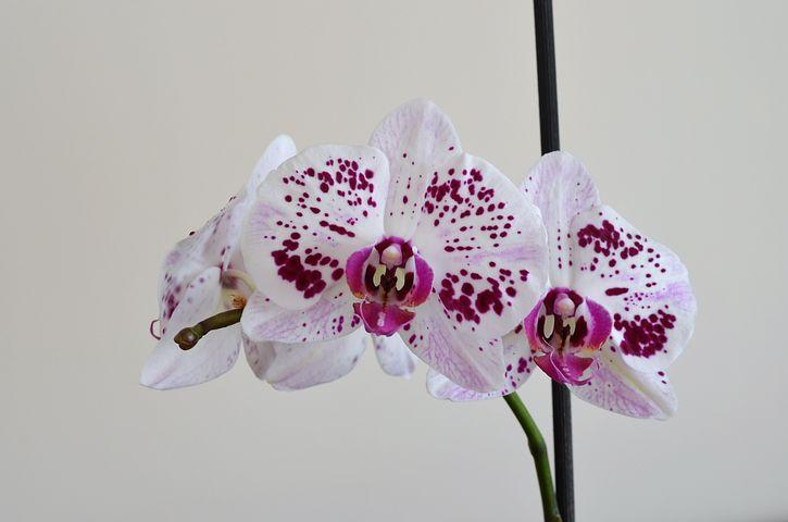 совершенно точно орхидеи и лили картинки Железнодорожного содержит