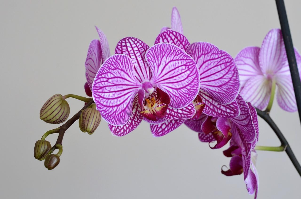 телефоны, часы орхидеи и лили картинки Казань часы