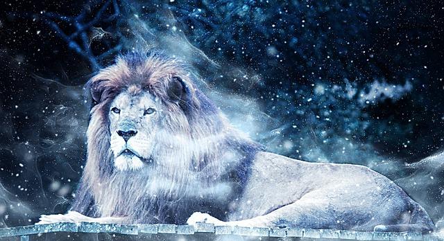 lion snow art 183 free image on pixabay