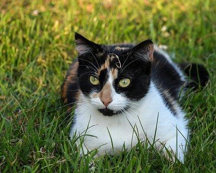 Čierna lesbičky mačička fotky