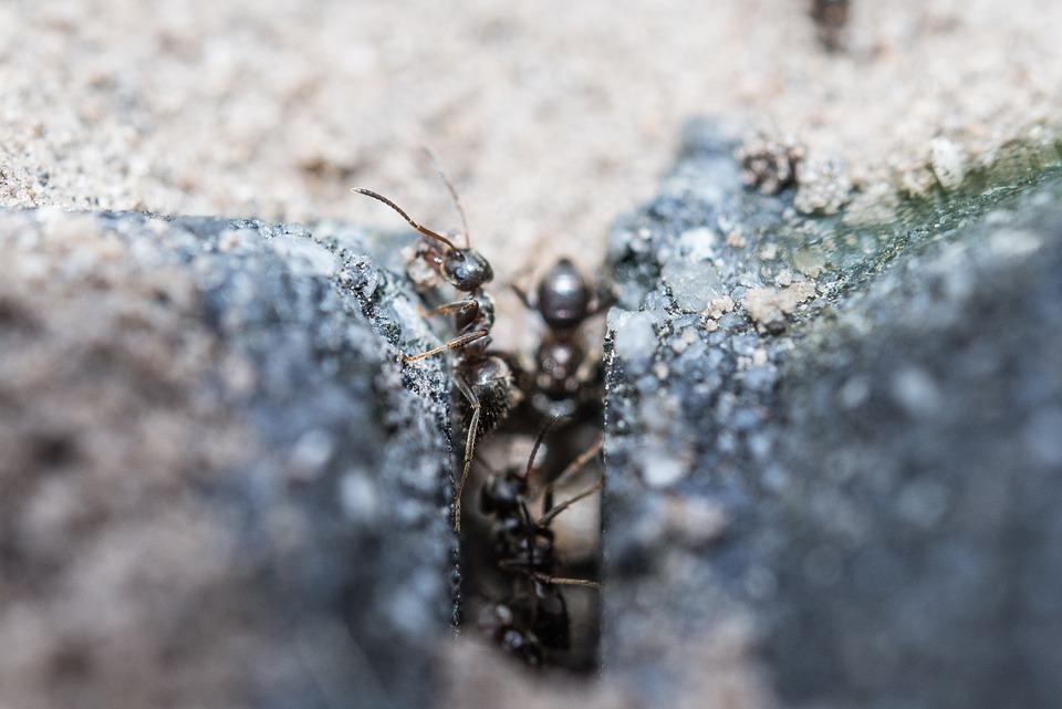 Mravce, Makro, Práca, Hmyz, Voľne Žijúcich Živočíchov