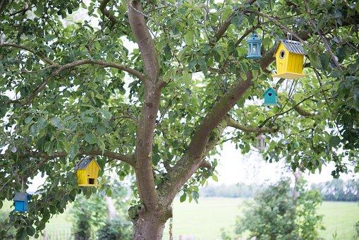 Bird Houses, Bird, Tree, Apple Tree
