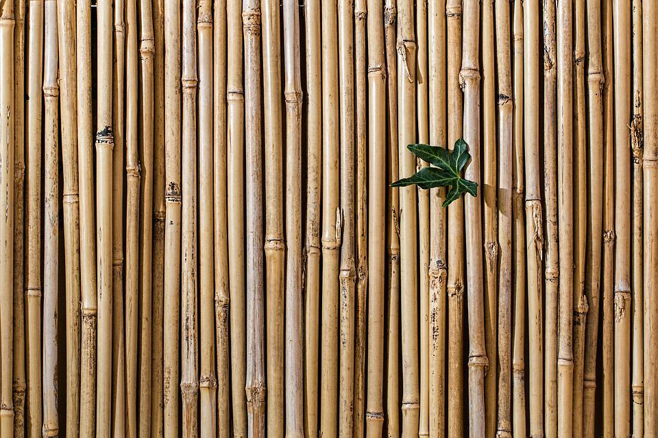 Bambus, Bariery, Ogrodzenia Ekran, Tapety, Tekstura