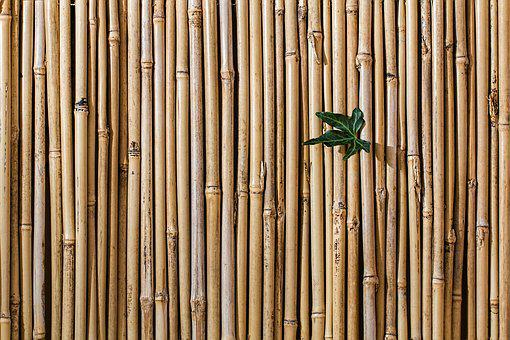 Bamboo, Barrier, Screen Fence, Wallpaper
