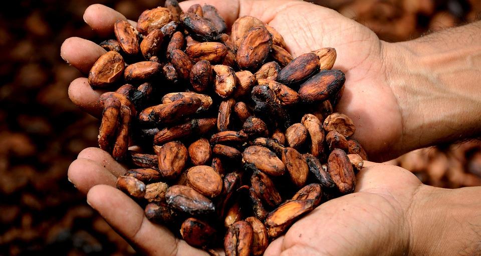 Manos, Cacao, Deliciosa, Semillas De Cacao