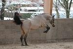 pony, horse, standard