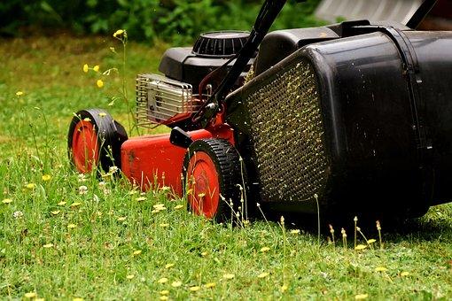 Lowes Plants - Le meilleur choix pour le jardinage d'intérieur