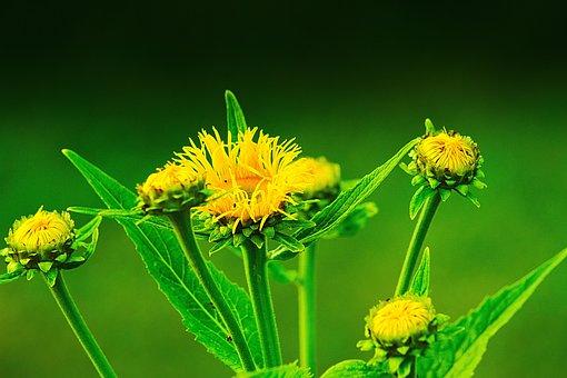 Blume, Gelb, Blüten, Pflanze, Nahaufname