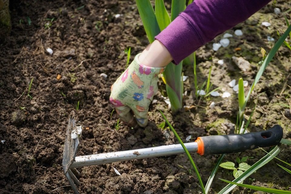 Work In The Garden, Garden, Digging, Plucking Weeds