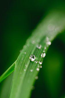 Green, Water, Leaf, Dew, Nature, Grass