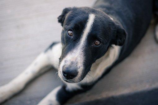 Dog, Animal, Homeless, Pet, Cute, Puppy
