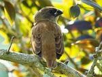 sparrow, bird