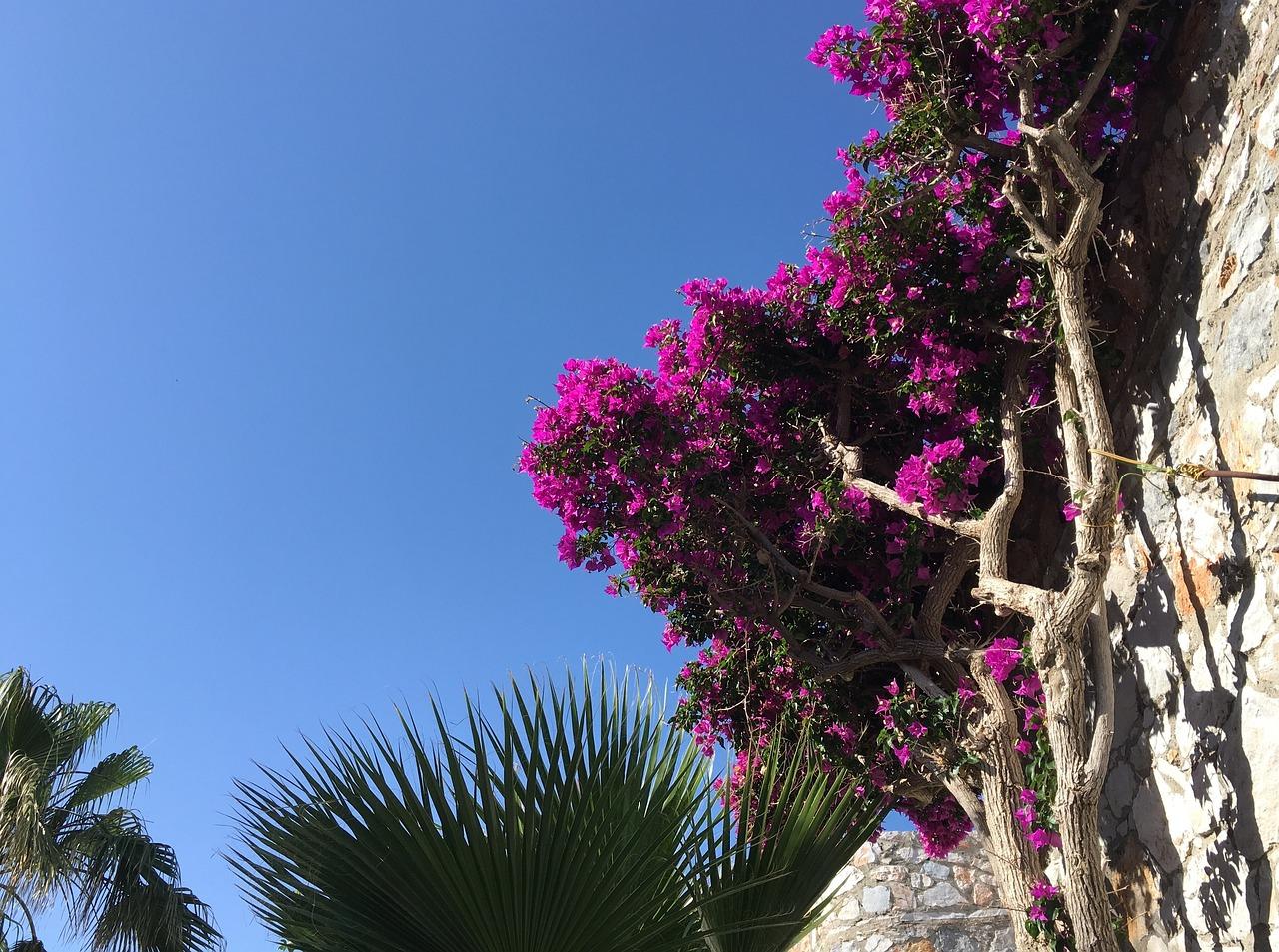 раскинулся прекрасном цветы греции фото и названия нас