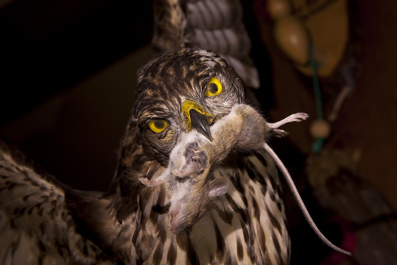 Питание совы картинки