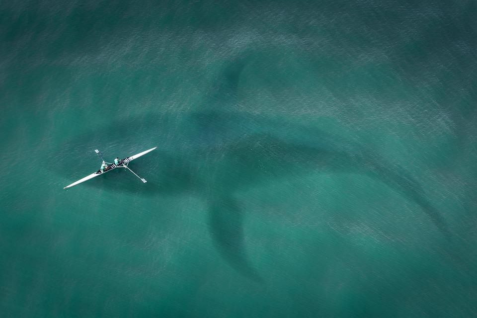 ボート, 上から, トップ ビュー, ハイ, ホオジロザメ