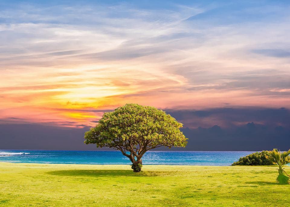 Free photo tree sea grass nature ocean free image for Landscape grasses for sun