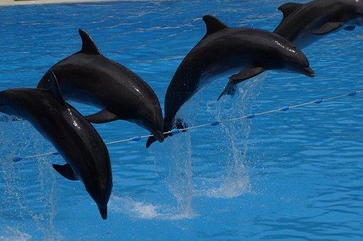 Delfine, Bơi, Dolphin