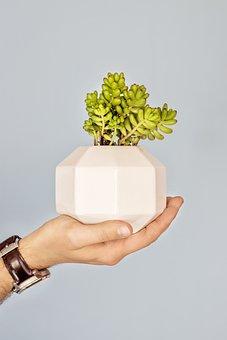 Studio Somi, Mexico, Handmade, Plant
