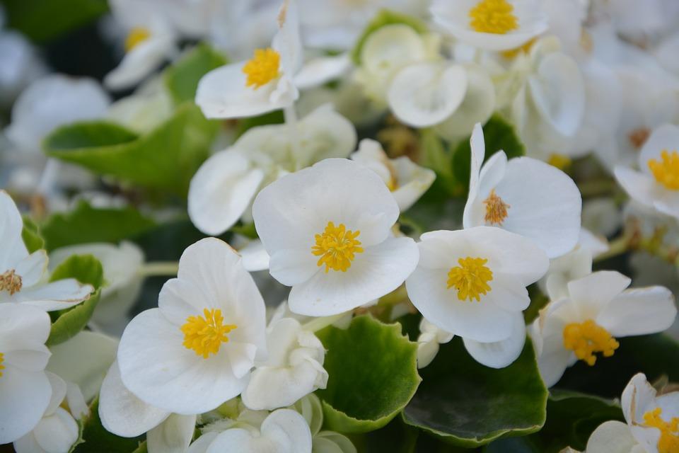 Flower white nature free photo on pixabay flower white nature green yellow white flowers mightylinksfo