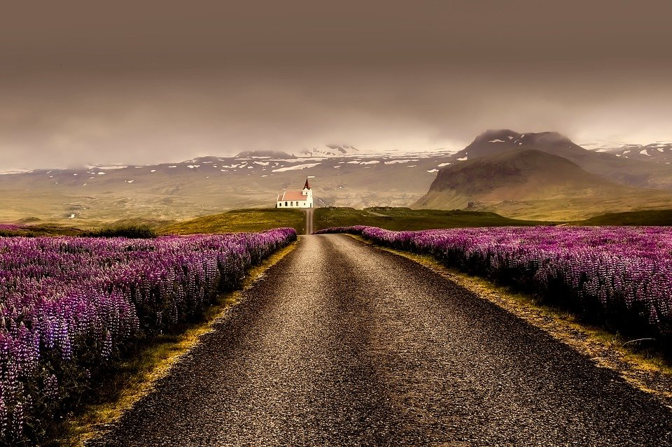 Iceland, Flowers, Landscape, Road, Nature, Outdoors
