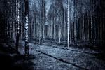 forest, night, dark