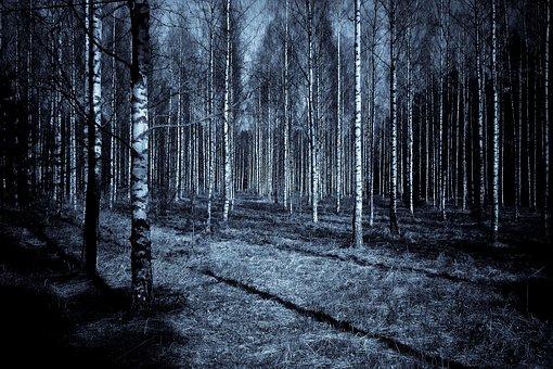森林, 泊, 暗い, 影, 空, 木材, バーチ材, 不気味な, ホラー
