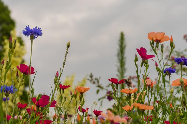 Summer Meadow Flowers Background 183 Free Photo On Pixabay