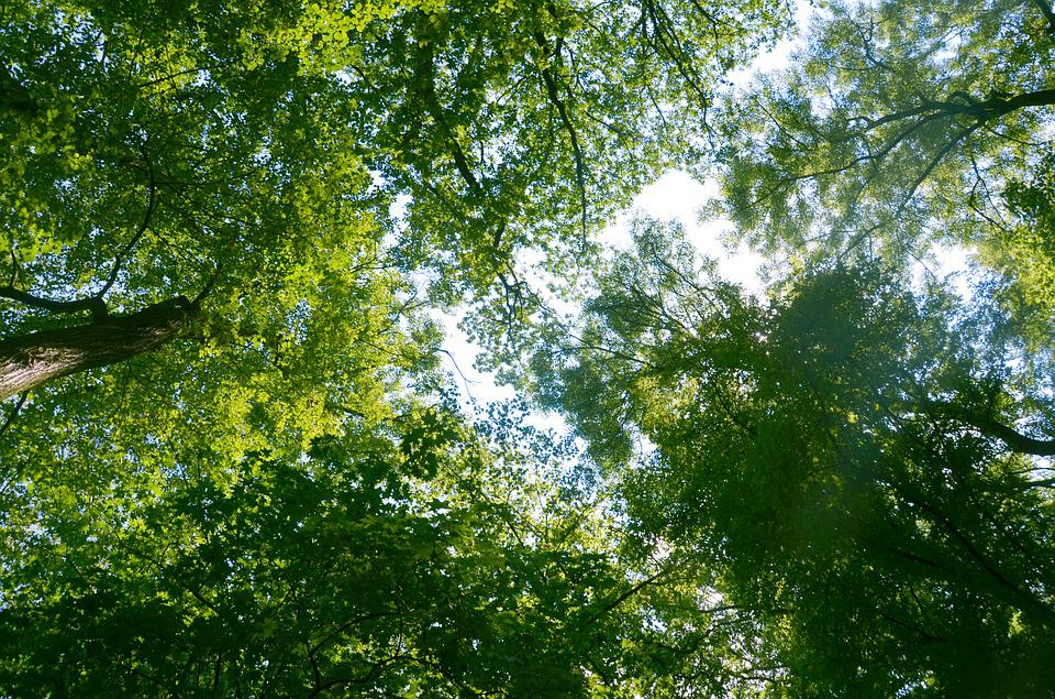 Arbres, Branches, Vue, Ciel, Cime Des Arbres, Nature