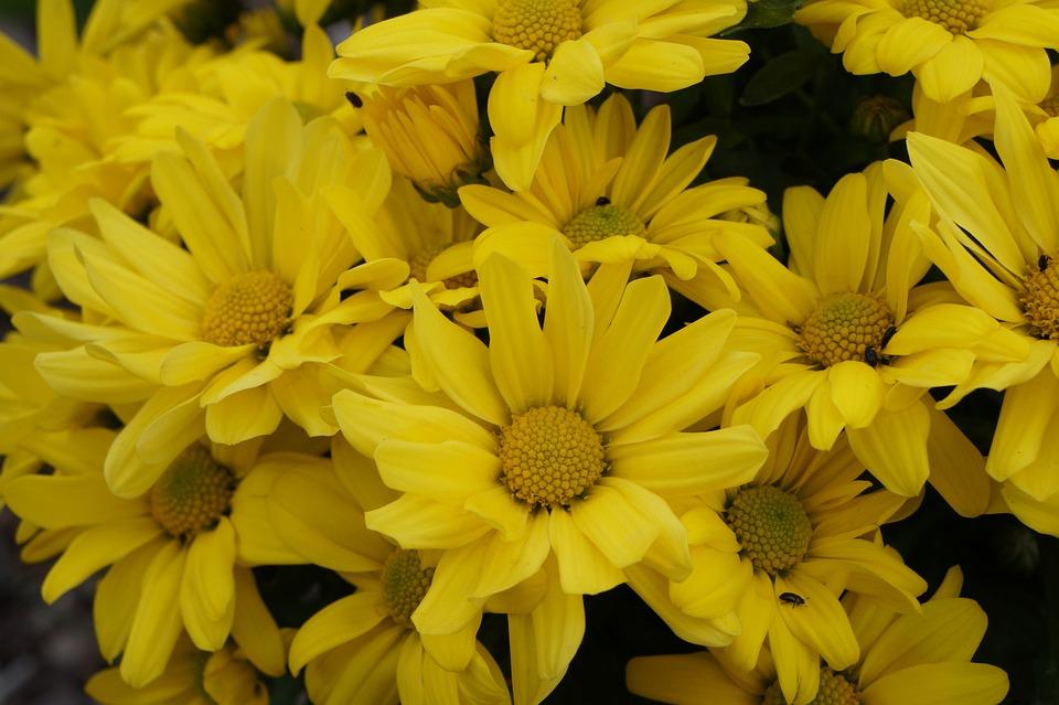 Fiori Gialli Immagini.Fiori Giallo Fiore Foto Gratis Su Pixabay