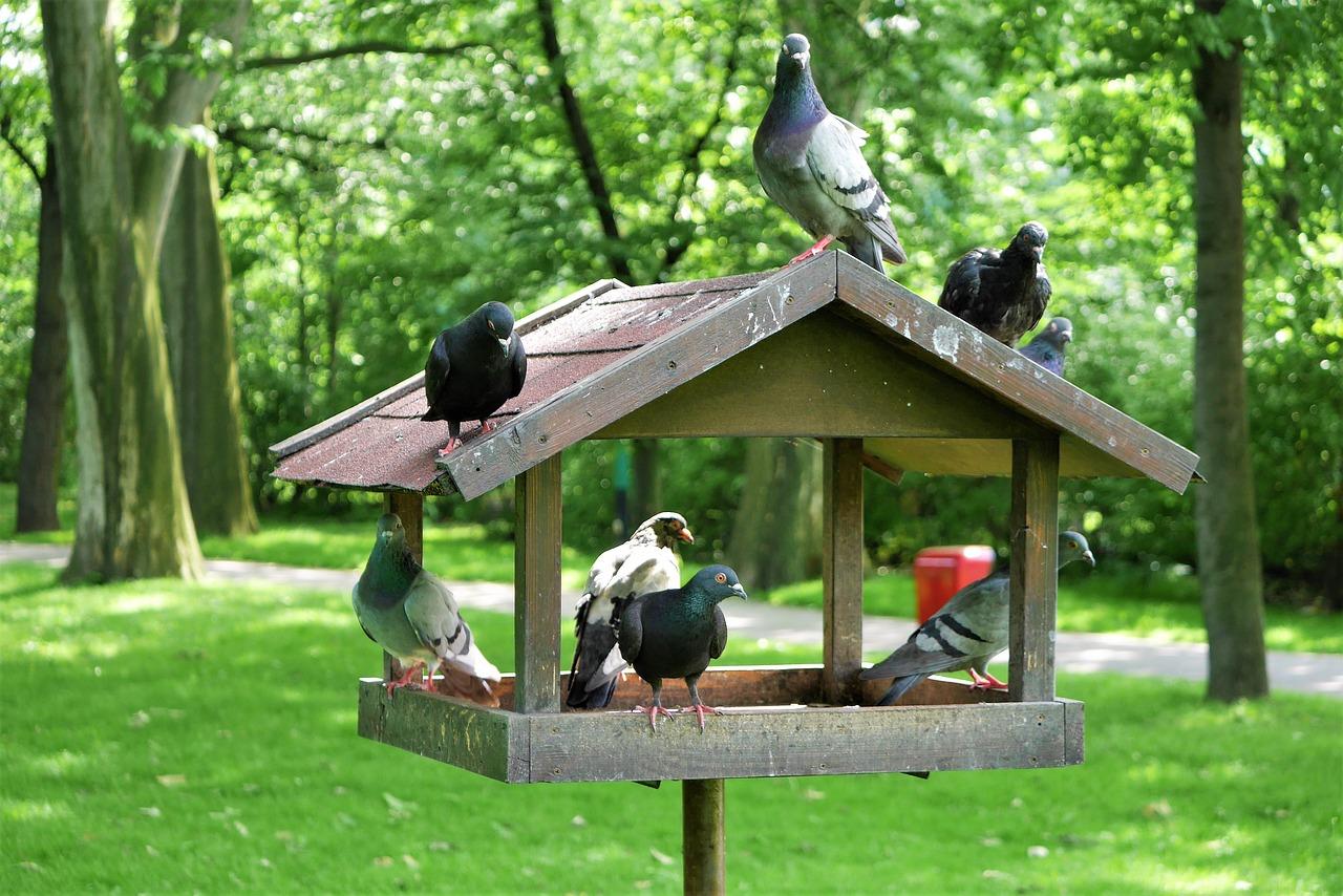 птицы парков и садов фото разобрать