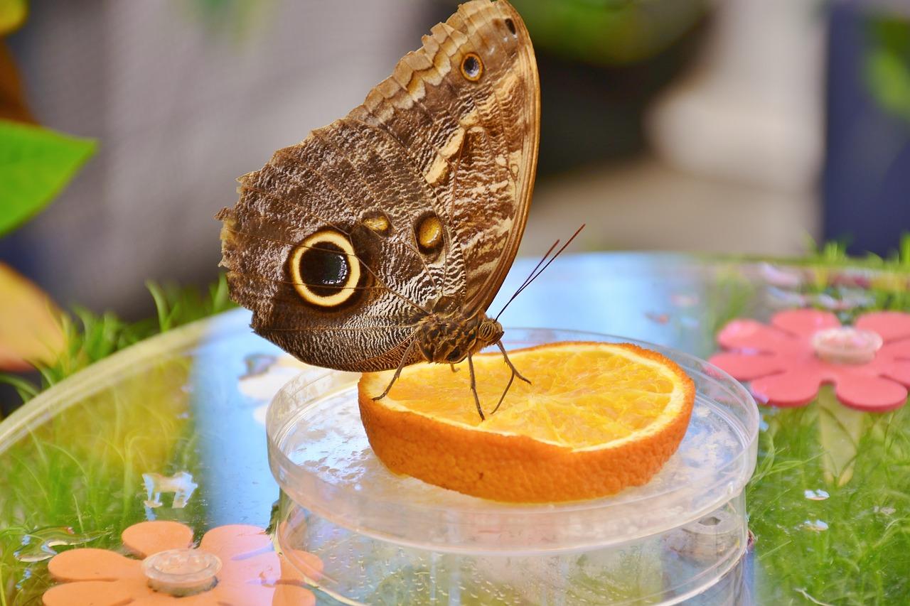 6 ciekawostek ze świata zwierząt - jak jedzą motyle