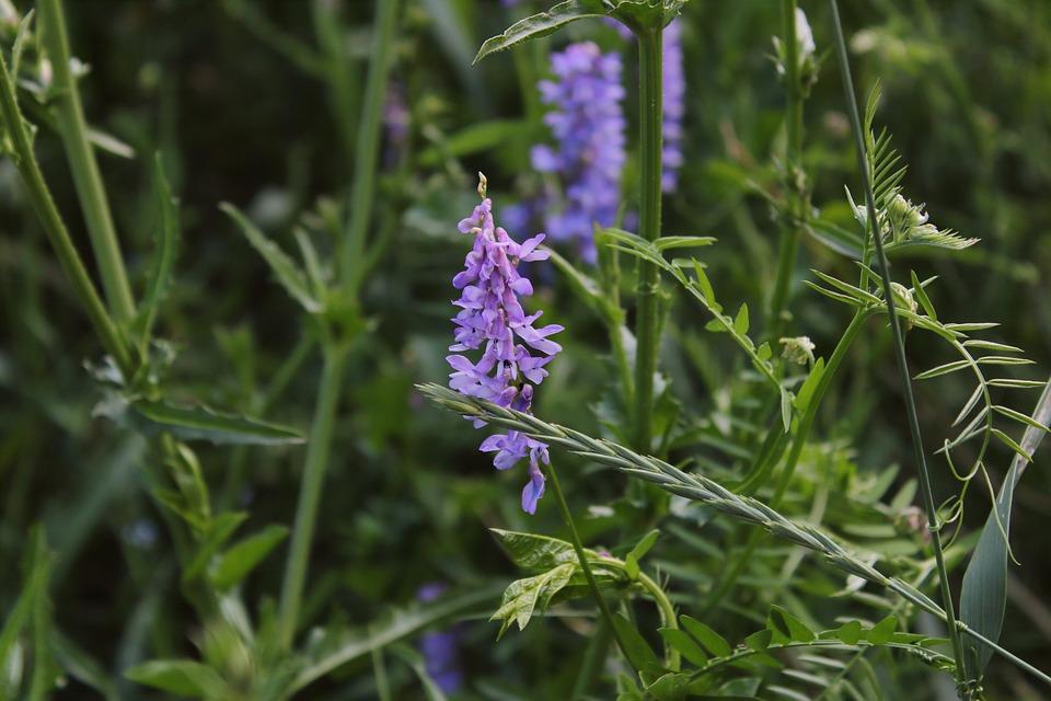 Purple flower weed macro weeds in free photo on pixabay purple flower weed macro weeds in the field mightylinksfo