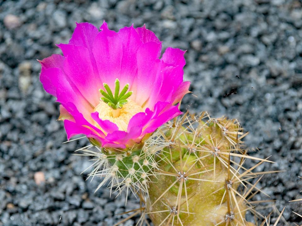 jardin de cactus cactus lanzarote spain