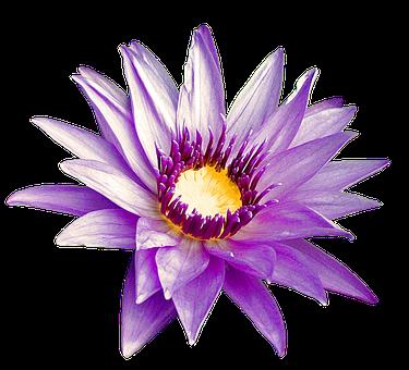 Fleur Pourpre, Nature, Été