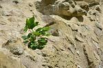 rock, wall, plant