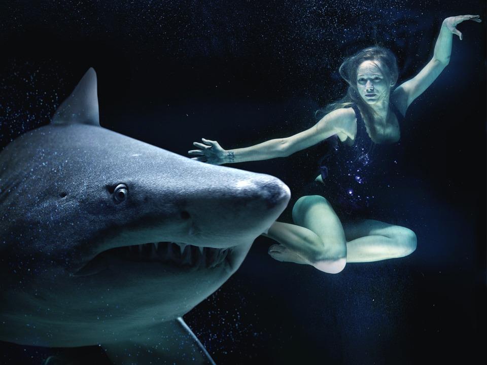 woman hai great white shark free photo on pixabay