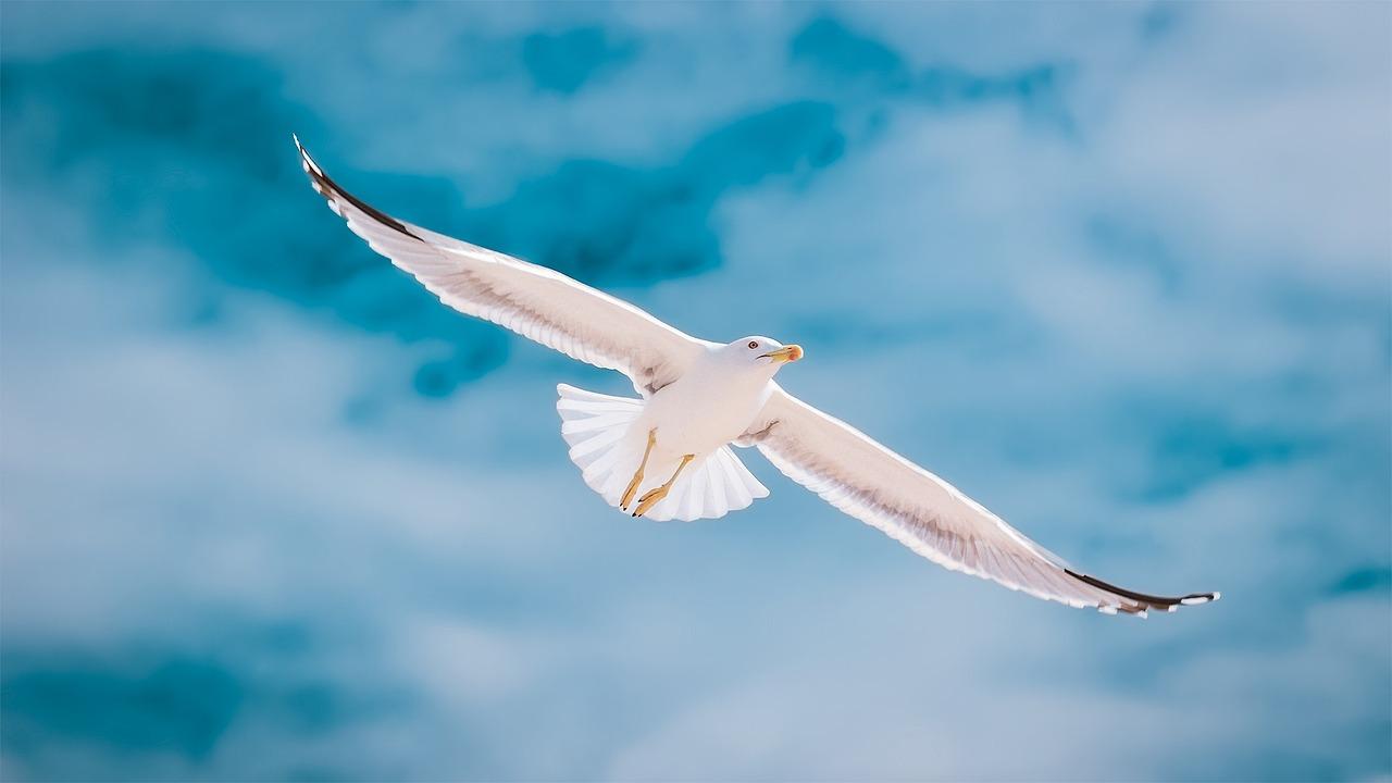 фото символа чайки