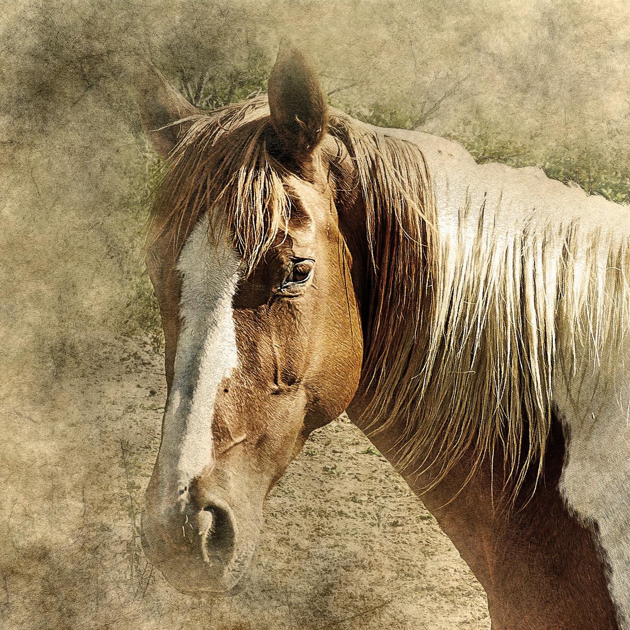 Horse Head Art Free Image On Pixabay