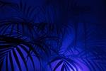 palm, diffuse, art