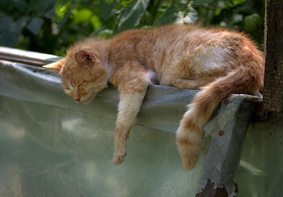 Kočka, Spánek, Červená, Líný